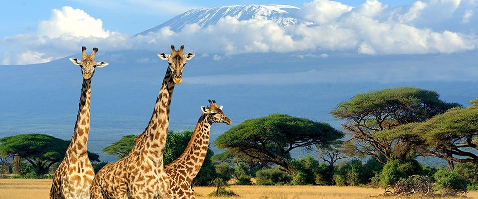 5 African Countries That Should Be On Your Travel Bucket
